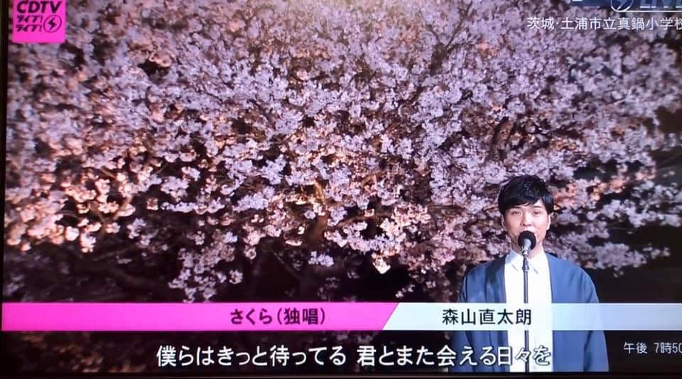 真鍋の桜の魅力をより一層引き出していましたpage-visual 真鍋の桜の魅力をより一層引き出していましたビジュアル